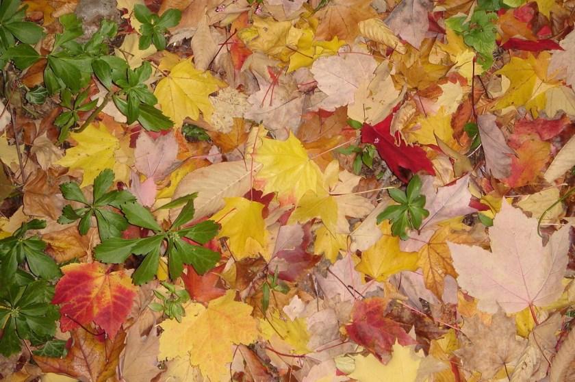 Fall in Chestnut Hill, Phialdelphia